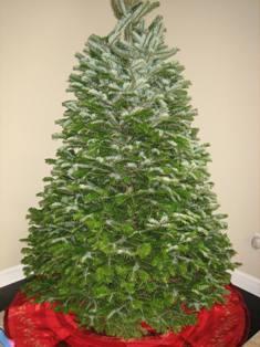 tree-08-001-rs